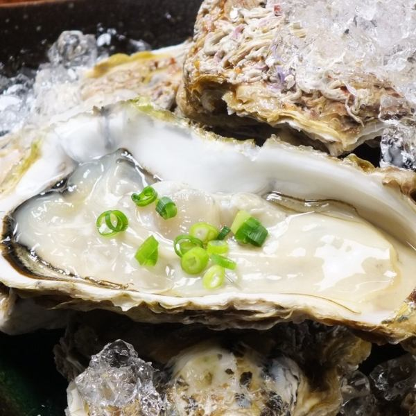 Super fresh! Tamararo oyster (depending on the day, suppliers and production areas are subject to change)