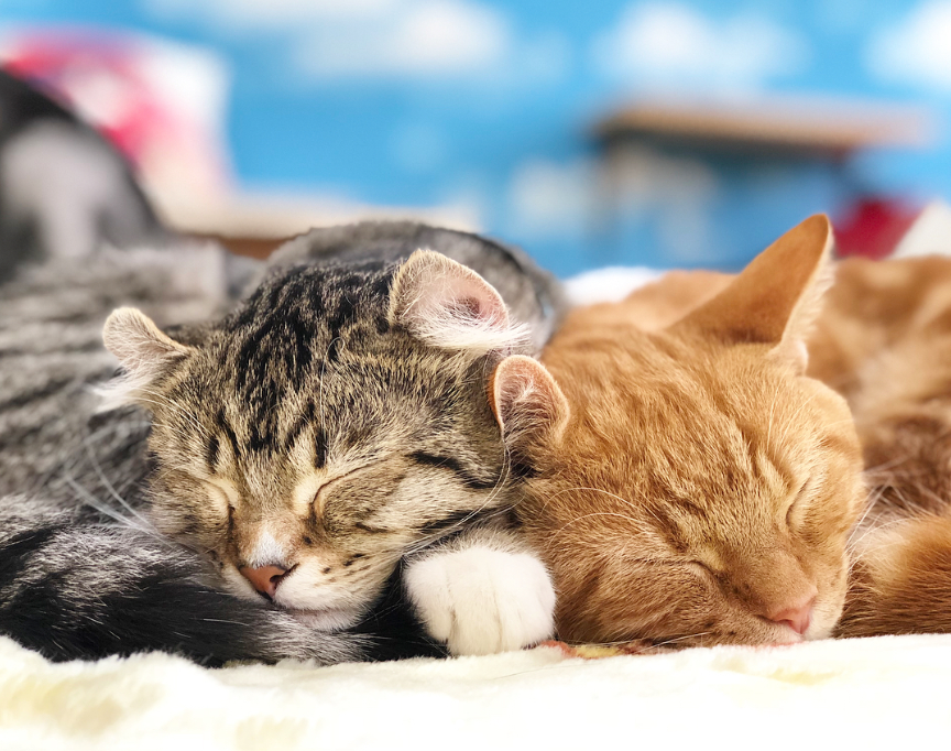 Time of bliss with cats ♪