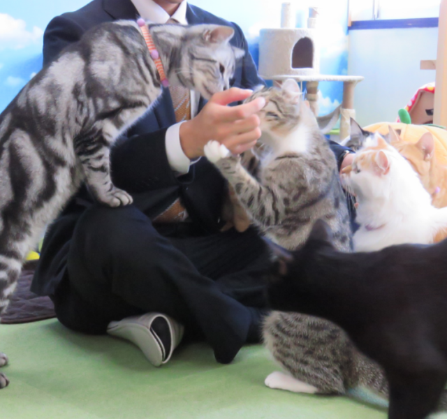 Men are also welcome ♪ Will not cats be cured by the cats at the end of the work? Pretty cats are waiting ♪