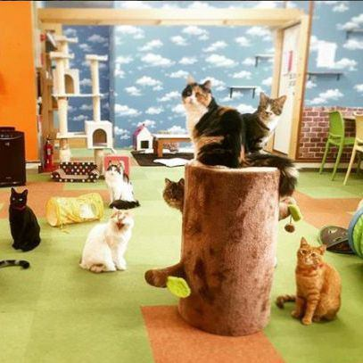 Encounter with a new cat is waiting at a cat cafe with a calm atmosphere ♪