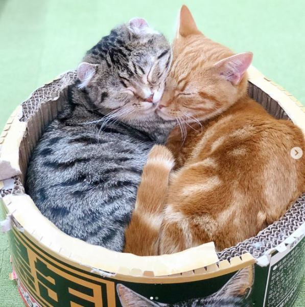 Neko Koshi's cats ☆