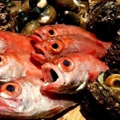 精通当地新鲜鱼类和当地清酒!