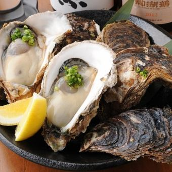 Today's large oyster