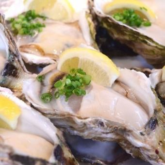 Large grain raw oyster bulk (6 pieces)