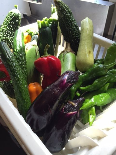野菜達  京都加茂産の有機野菜   (夏)