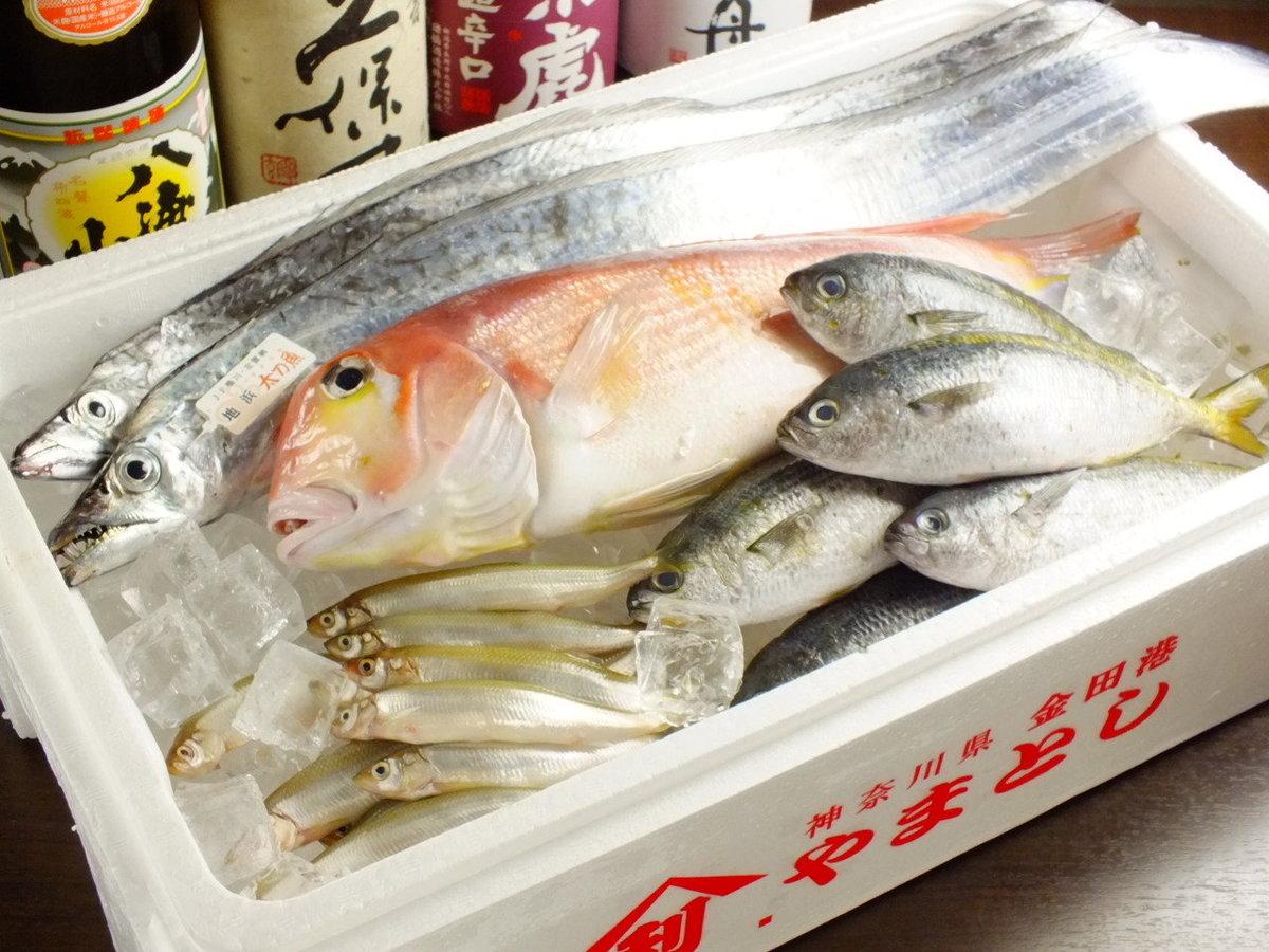 神奈川県三浦・千葉県館山、各地漁港の近海もの
