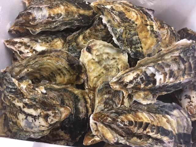 岡山県日生の牡蠣
