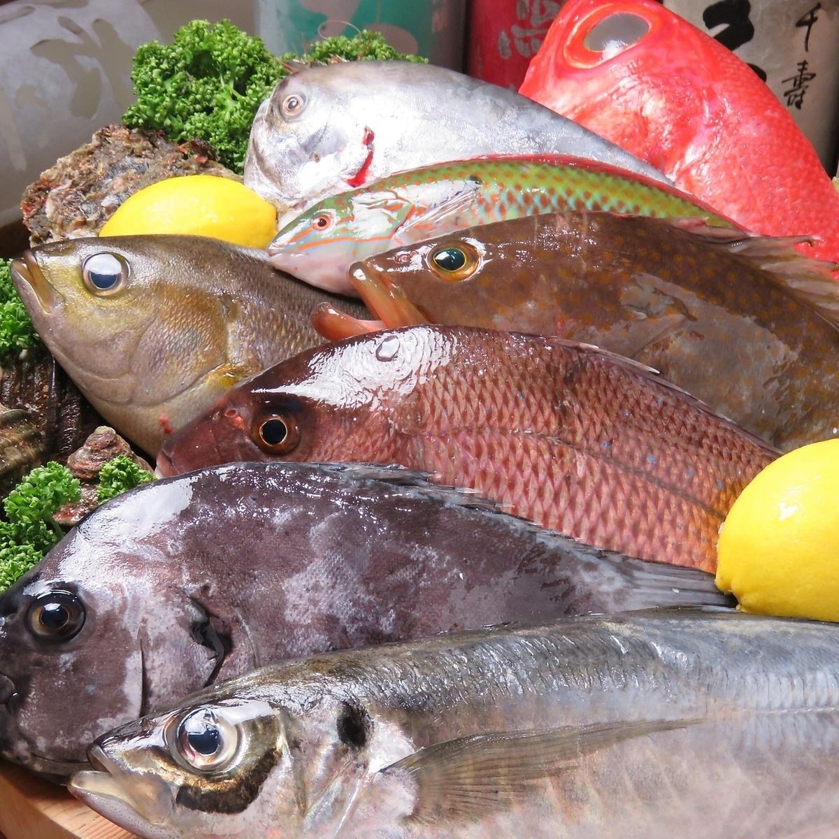 吃精心挑选的鱼