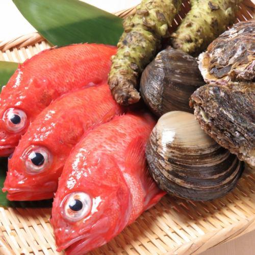 産地直送の鮮魚をご用意