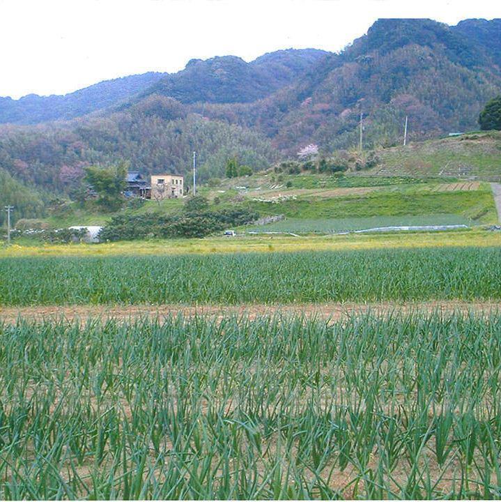 岡山の自家農園より直送の農薬不使用な新鮮野菜。