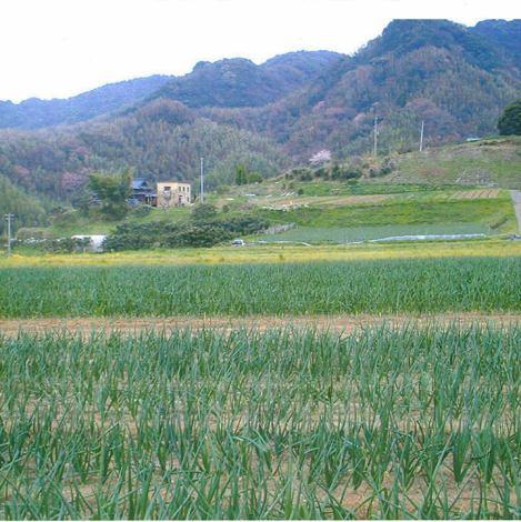 岡山の自家農園より農薬不使用のお野菜をお取り寄せ