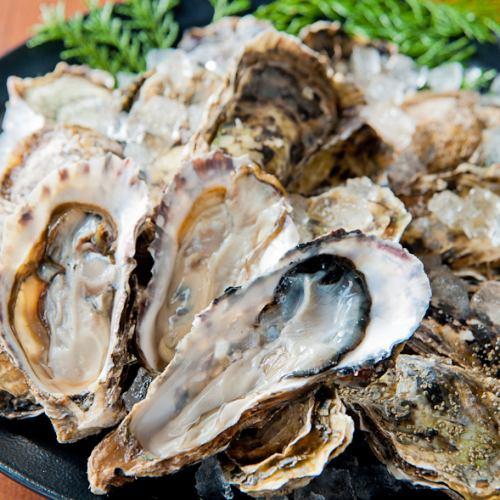 【厚岸直送】厚岸産ブランド牡蠣