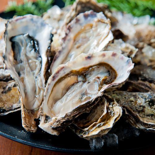 1年通して食べられる日本唯一の産地北海道厚岸産のカキ