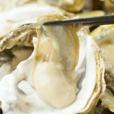 Raw oysters are available on 365 days ... 250 yen!