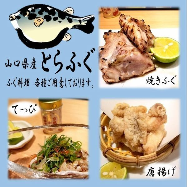 "The winter king! Yamaguchi prefecture ""Tiger fu"" is in stock."