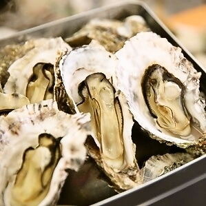 Oyster directly from Igor Fisheries to Ise Bay