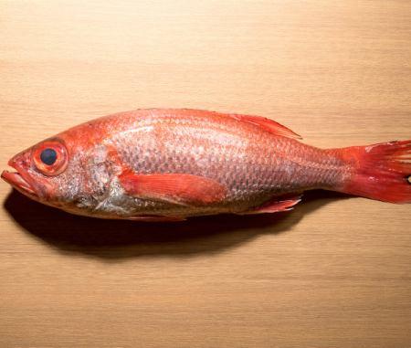 焼津沖 深水 300メートル釣り物1kg の赤むつ