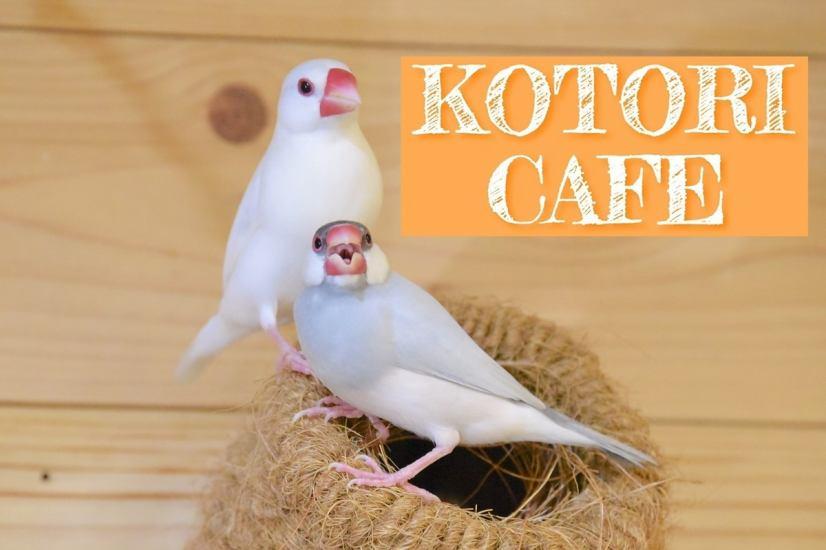 在Sugamo的一个可爱的咖啡馆与纪录片鸟!有一个愈合的空间♪鸟会见☆