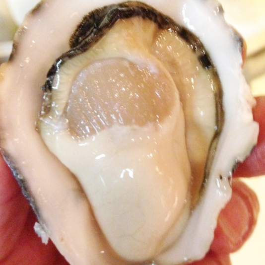 Provided to customers in the state of living oyster maker is alive ♪