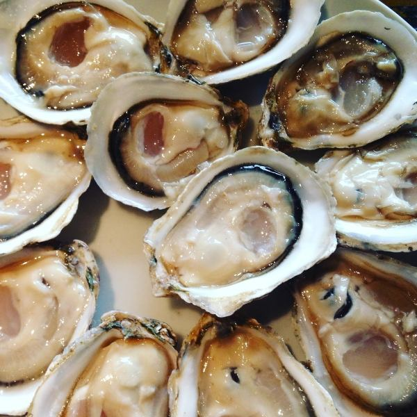 Delicious raw oysters can be eaten all year round ♪
