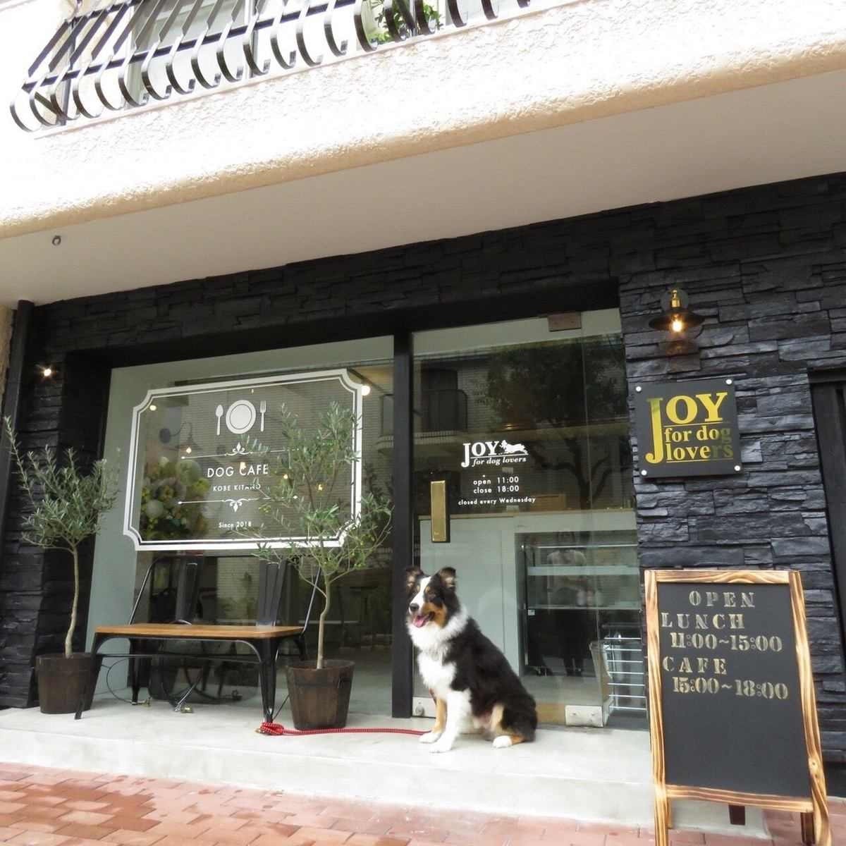 Kitano Ijinkan-kai鎮上的新開張!和狗一起去咖啡館。狗的菜單也很豐富!