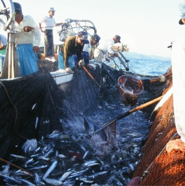 Applicable ingredients for direct delivery from Kishu Min-Onima fishing port and Cape Muroto Shikoku