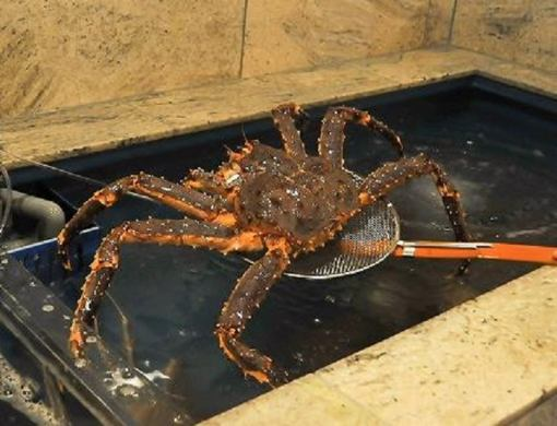 螃蟹涮锅课程