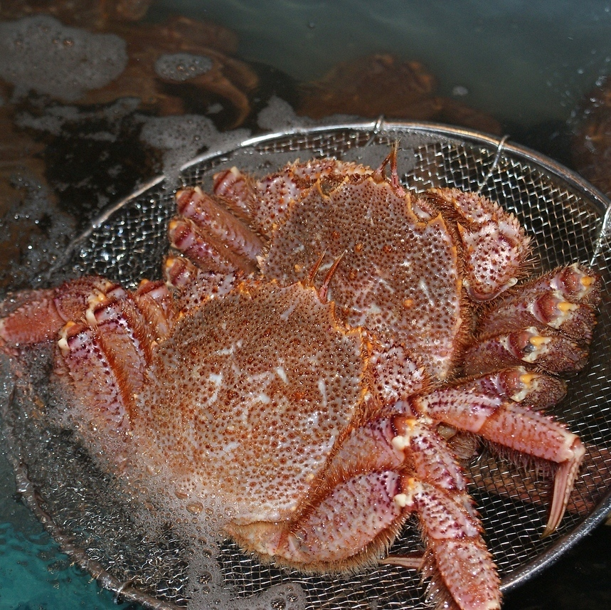 Offer in the recipe of your choice an active hairy crab of hope from the cages of the store