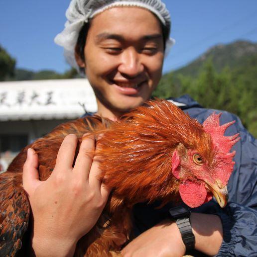 환상의 토종 닭 아마쿠사 대왕