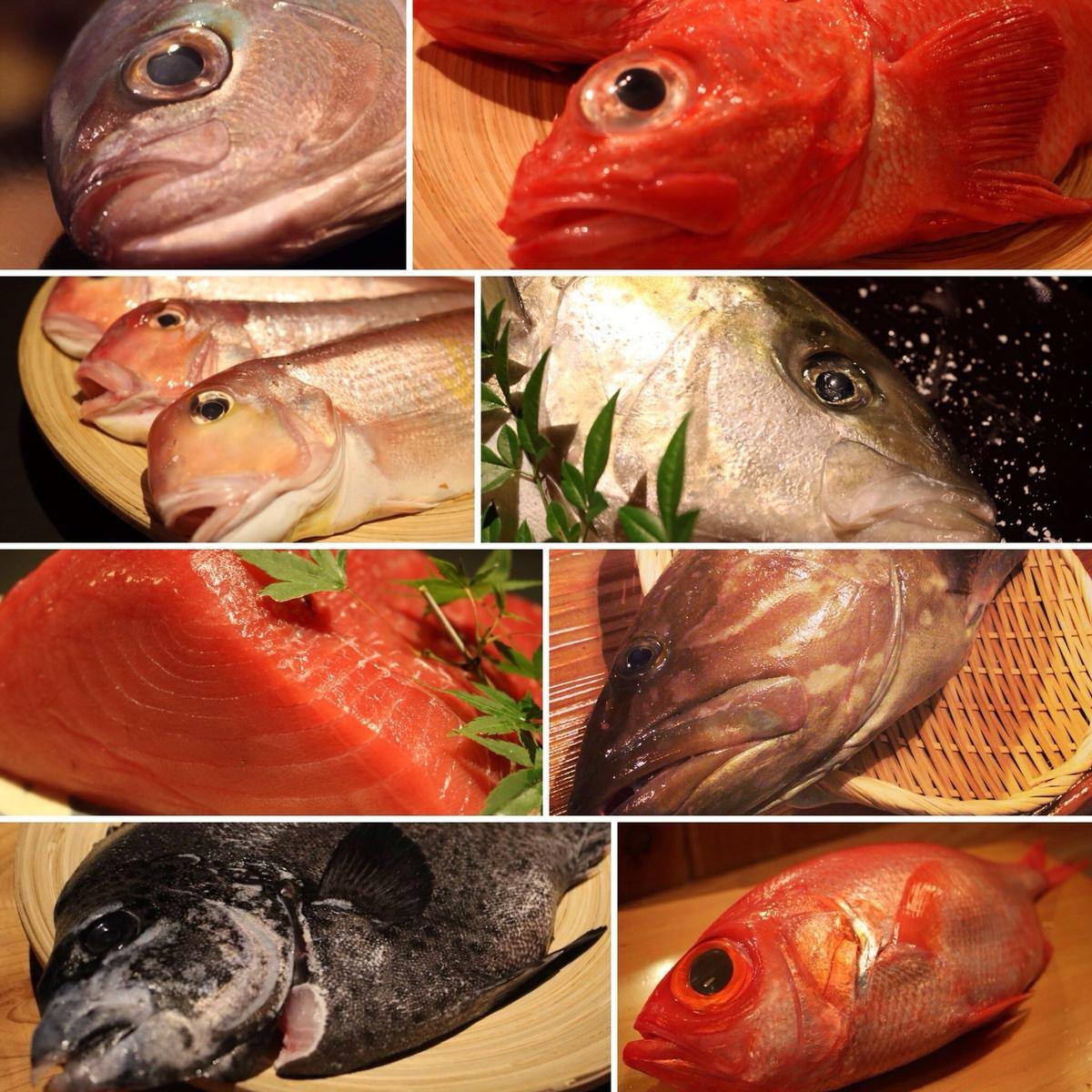 """新鮮的魚誰去到長浜漁港。在自己的技術的五倍,""""冰冷的長時效"""",將上浮10倍和味道!"""