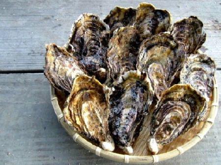 「ホームページ見た」で半額!生牡蠣が1個175円で食べられる!