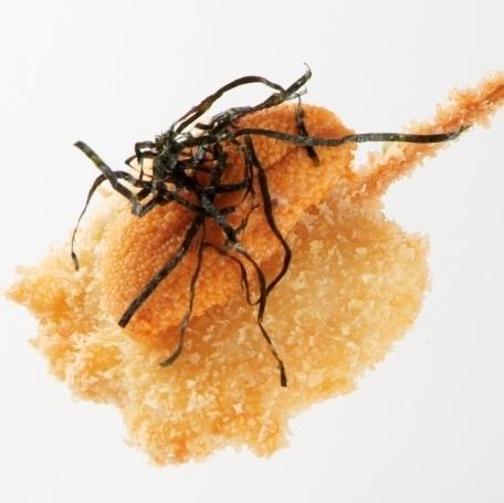 Pick up sea urchin sea urchin