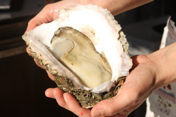【Akasaka one deck with superior oyster】 Assorted 4 raw oysters of the day