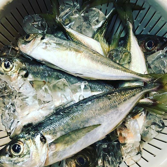 市場のすぐそばだからこそ提供できる鮮魚の味は格別!
