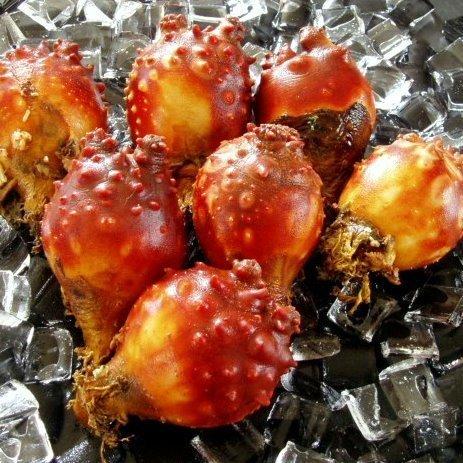 【Inagawa Produce】 Hoya Sting · Hoya Vinegar