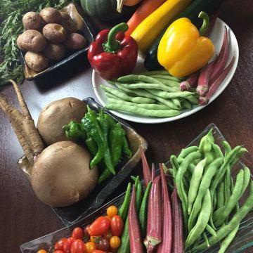 今週の野菜たちです。