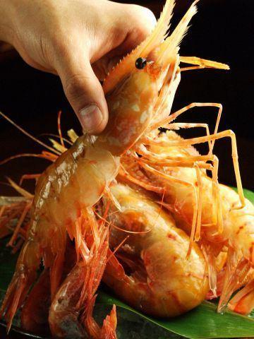 Extra large button shrimp sashimi