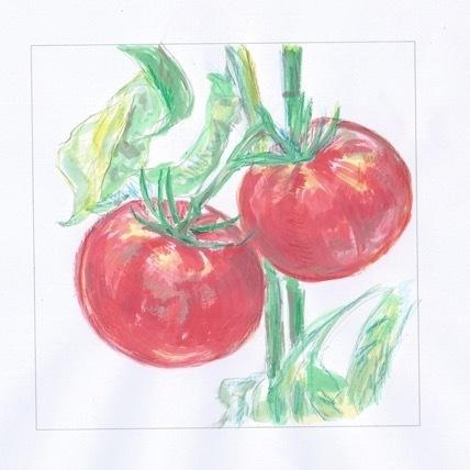 冷却的西红柿