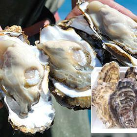 昼宴会にも♪◆生牡蠣や人気のパスタも入ったオススメ!!豪華≪ランチ≫コース2500円