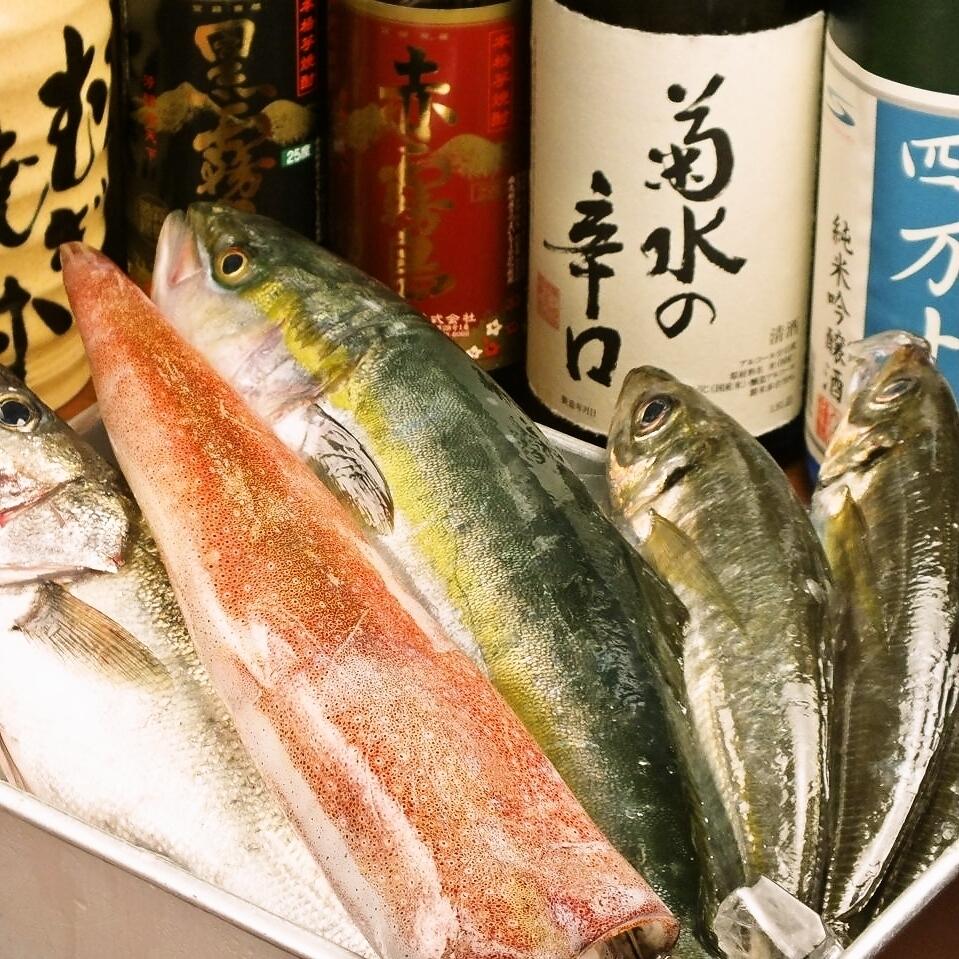 오키에서 생선
