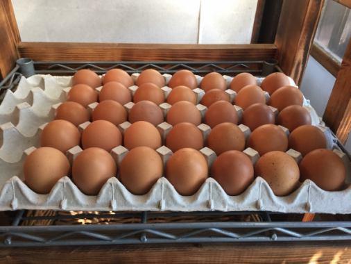"""在商店里,卖kawabe锅禽舍的""""Momiji蛋""""♪为纪念品推荐大量的维生素,由宽敞的自然和丰富的土地制作的美味鸡蛋!"""