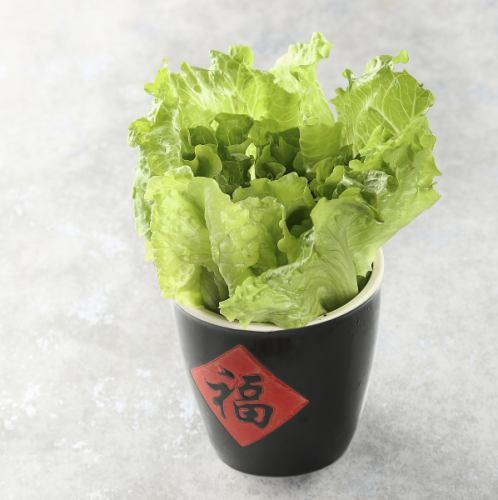 レタス/ほうれん草/白菜/水菜