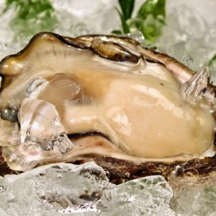 Fresh and plump [rock oyster] May - the end of August