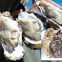 ◆お得な全7品◆生牡蠣や人気のパスタも入ったオススメ!!豪華≪ランチ≫コース