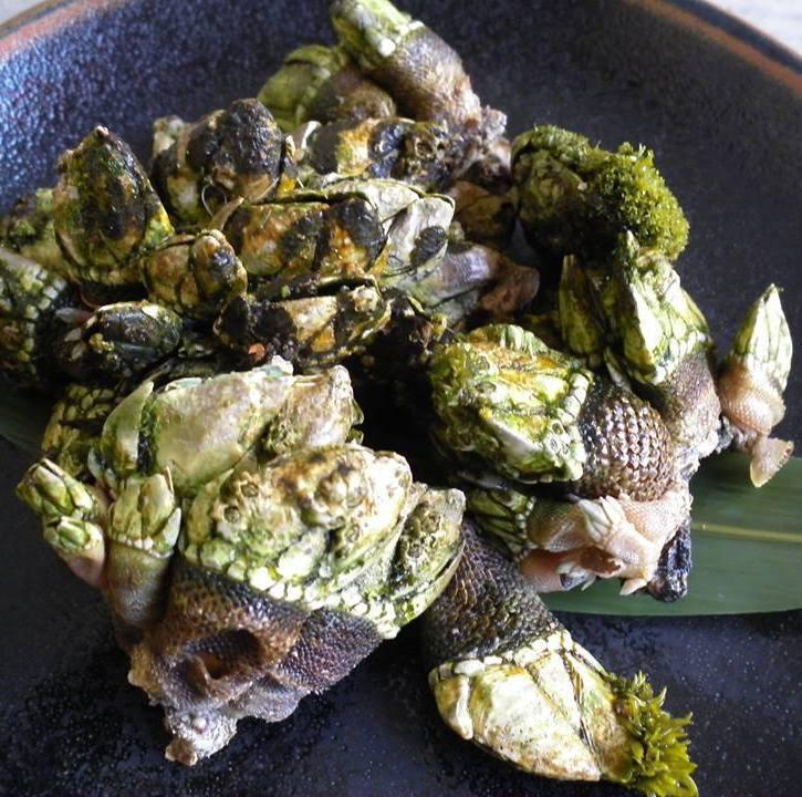 Delicacy delicacy! Turtle's hand