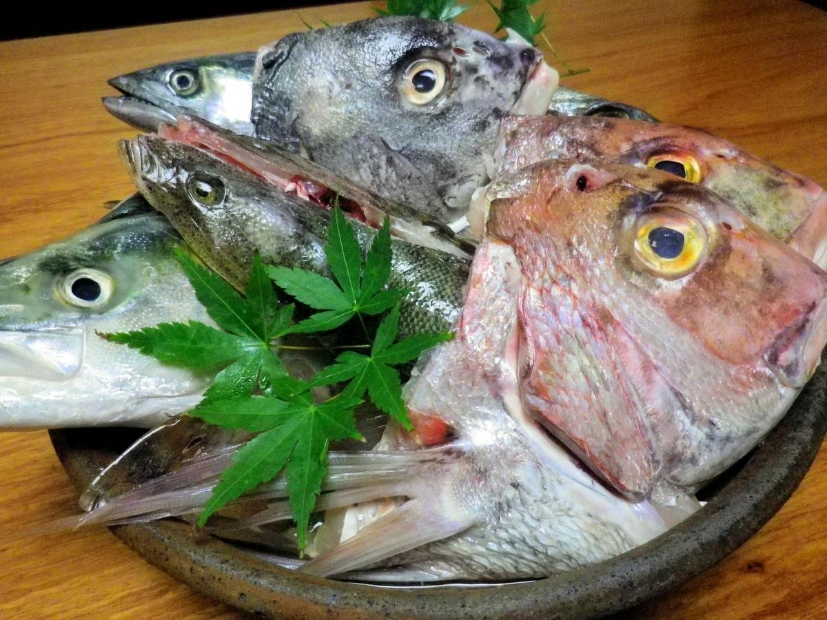 朝獲れた地魚のみを使用!