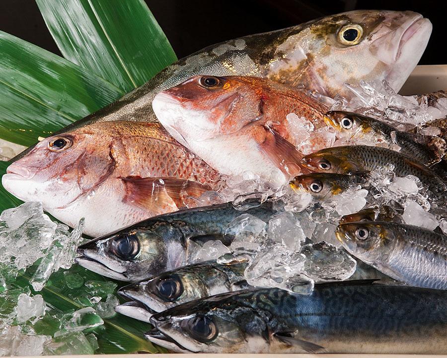 [매일 매입 맛있는 생선] 나가 하마 어시장 직송! 활 생선 통해 ♪