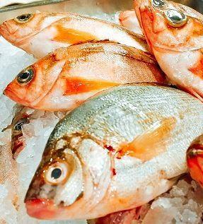 漁港直送や市場直買付けで仕入れる新鮮な魚介類