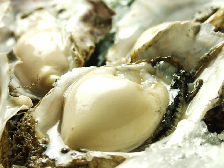 """""""Sorora"""" familiar with oysters and seafood appears in Aso!"""