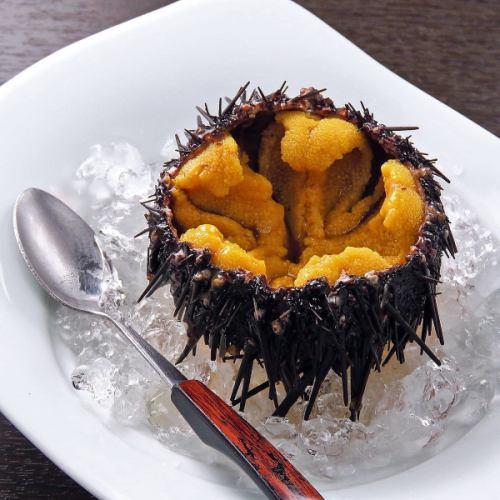北海道産殻付き生うに ※塩水とお召し上がり下さい